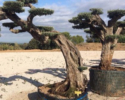 Exclusive trees