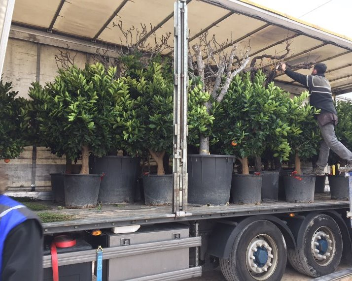 Een trailer vol Sinaasappel bomen, Vijgenbomen, Druivenranken, Cipressen