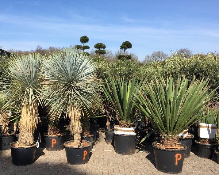 Woestijnplanten