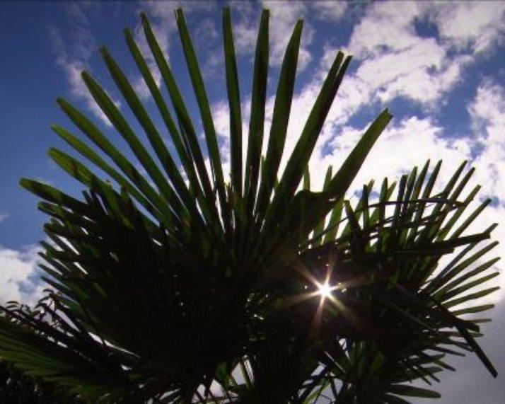 Portfolio palmbomen